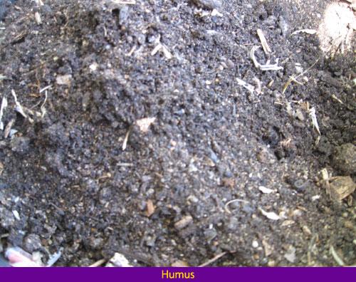 decomposition humus