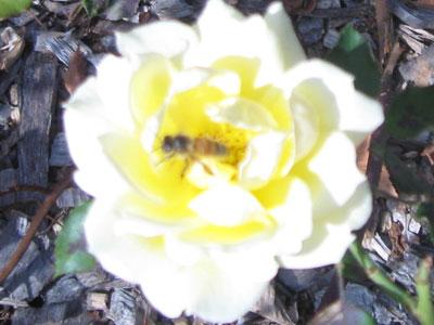 fertilization and pollination