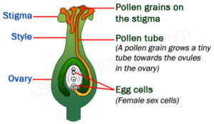 Proverbs Quiz 4 Pollination and Fertilization Quiz
