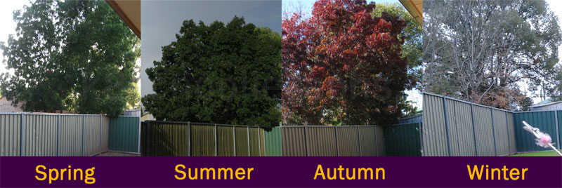 the changing seasons a tree in different seasons