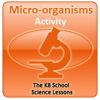 Human Skeletal System Quiz 1 Micro-organisms Activity