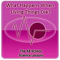Human Skeletal System Quiz 1 Decomposition – What happens when living things die?