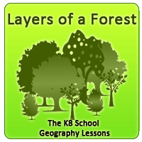 layers-of-a-forest