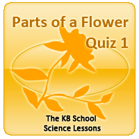 Human Skeletal System Quiz 1 Parts of a Flower Quiz 1