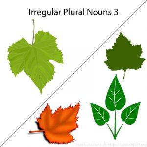 Irregular Plural Nouns 3 Irregular Plural Nouns 3