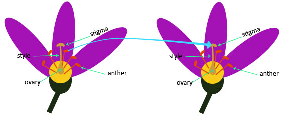 Pollination and Fertilization Quiz   Science Quizzes For Kids   Year