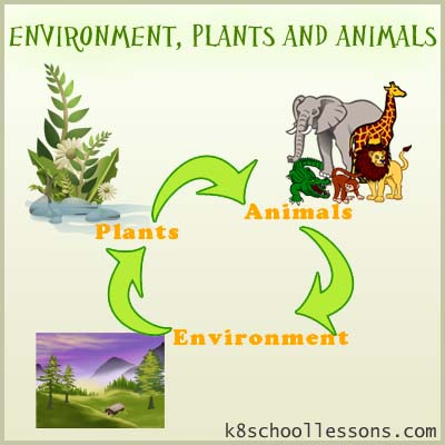 Environment, Plants and Animals