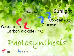 Science Photosynthesis