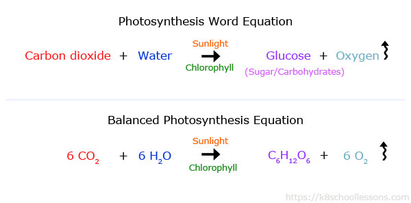 Photosynthesis Word Equation & Balanced Photosynthesis Equation