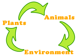 Interrelationships among plants, animals and the environment
