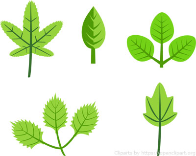 different shapes in leaves