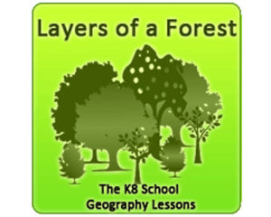 Key Stage Two Layers of a Forest