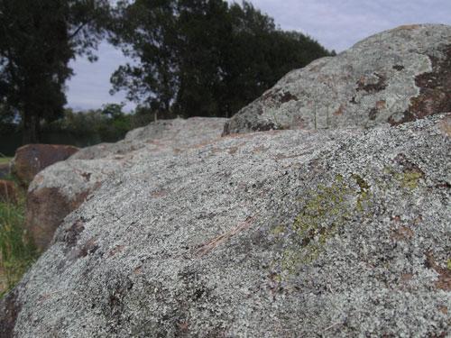 lichen-rock