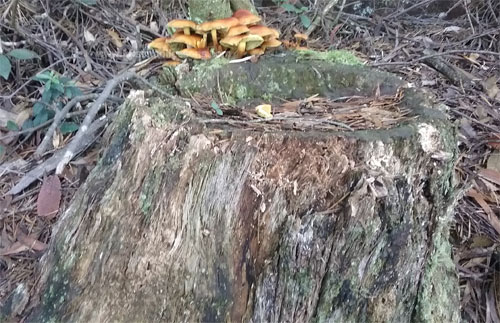 Example of decomposition Mushrooms