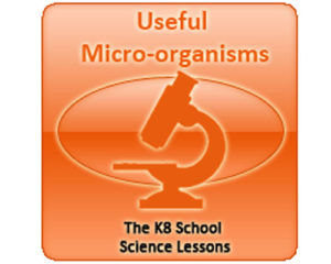 Science Useful microorganisms