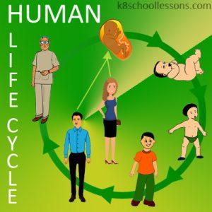 Human Life Cycle Human Life Cycle