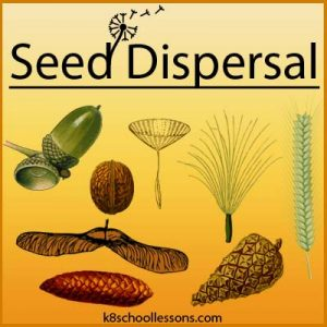 Seed Dispersal Seed Dispersal