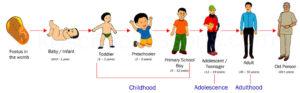 Science Human Life Cycle