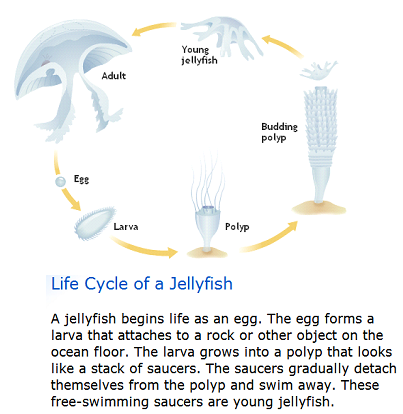 Reproduction - Life Cycle