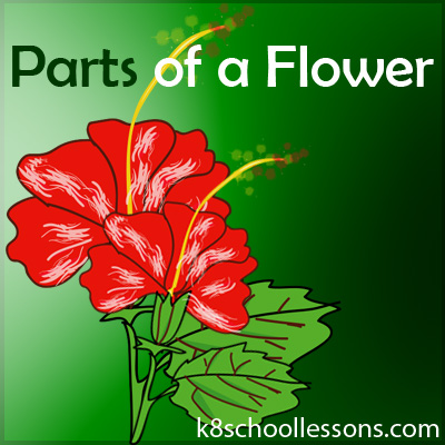 Parts Of A Flower Flower Parts Flower Structure Science Lessons