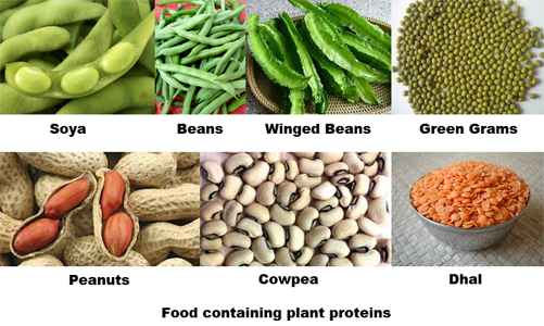 plant-proteins