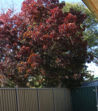 the changing seasons tree in autumn