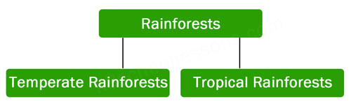 types of rainforests tropical rainforests temperate rainforests