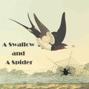 Subject and Predicate of a Sentence English Comprehension Skills Activity 5 – A Swallow and A Spider