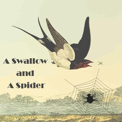 English Comprehension Skills Activity 5 – A Swallow and A Spider English Comprehension Skills Activity 5 – A Swallow and A Spider
