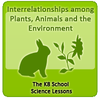 Environment Plants and animals