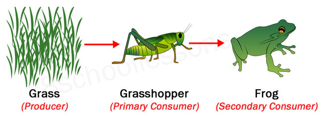 Food chains and food webs | examples of food chains and food webs.