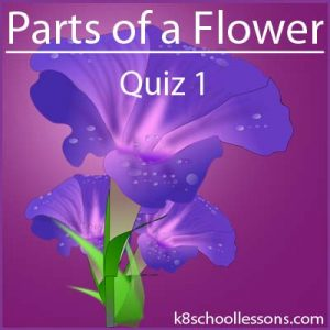 Parts of a Flower Quiz 1 Parts of a Flower Quiz 1