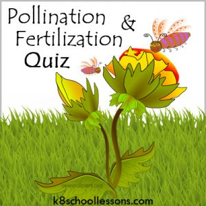 Pollination and Fertilization Quiz Pollination and Fertilization Quiz