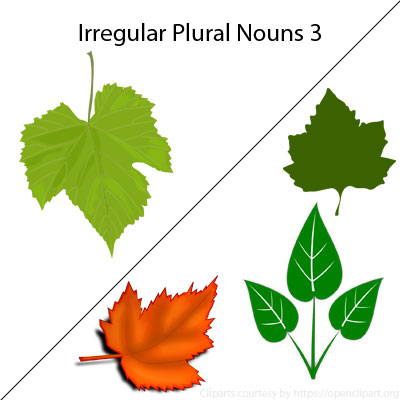 Irregular Plural Nouns 3