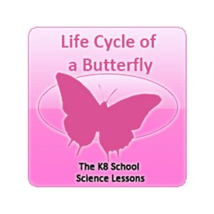 Science Life Cycle of a Butterfly Quiz