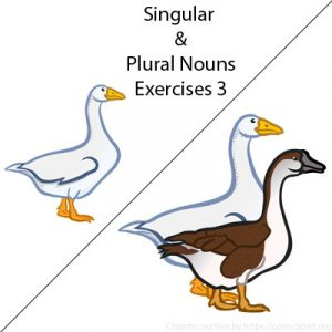 Irregular Plural Nouns Exercises 1 Irregular Plural Nouns Exercises 1