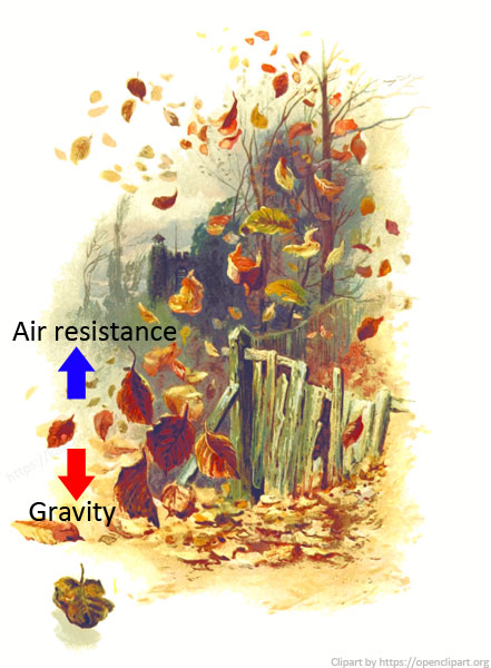 Air resistance for kids - A leaf is so light the pull of gravity is not much stronger than the upward force of the air resistance