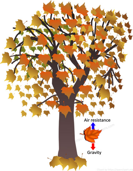 Air resistance for kids - A leaf fallen off a tree gently floats down to the ground