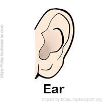 sense-organs-ear