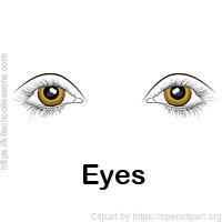 sense-organs-eyes