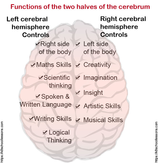 functions of left and right halves of brain