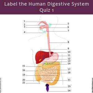Label Human Digestive System Quiz 1 Label Human Digestive System Quiz 1