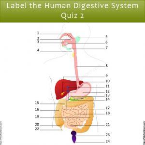 Label Human Digestive System Quiz 2 Label Human Digestive System Quiz 2