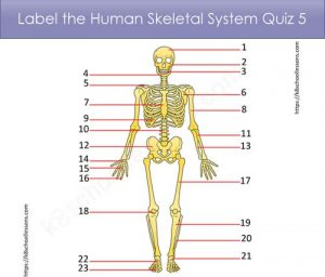Label Human Skeletal System Quiz 5 Label Human Skeletal System Quiz 5