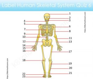 Label Human Skeletal System Quiz 6 Label Human Skeletal System Quiz 6