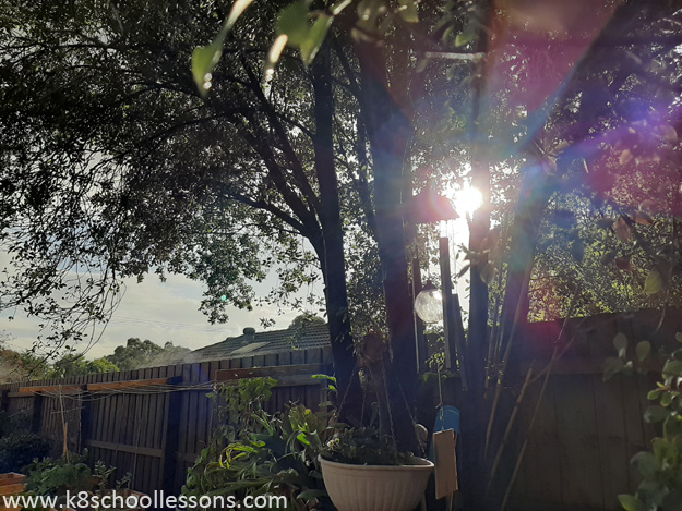 Sunbeams streaming through trees